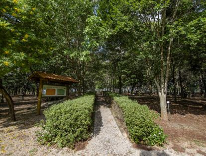 Arboretum Project