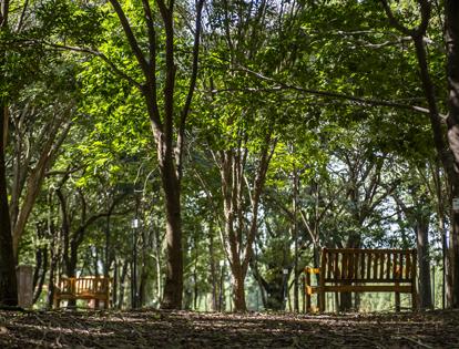 Proyecto Arboreto